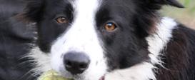 Velmi přítulný pes majitelů penzionu